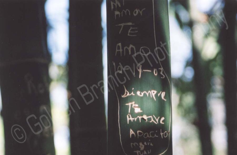 BambooWM