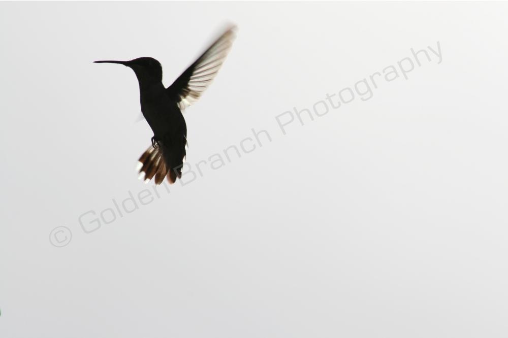 Hummingbird2WM