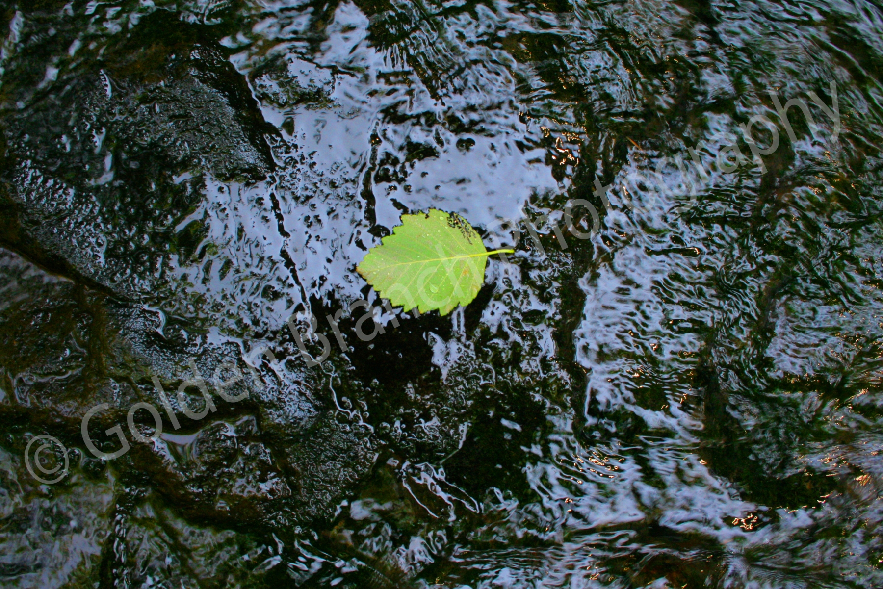 Leaf In Stream